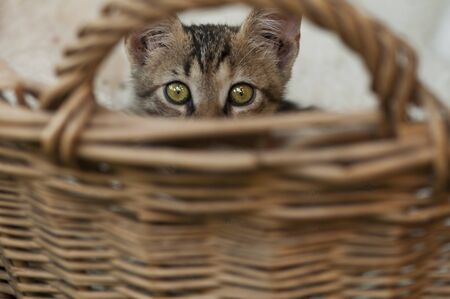 pussycat: Cat hiding in a basket made of straws
