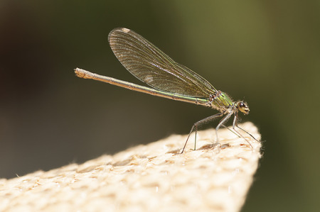 landed: A dragonfly just landed on a straw hat