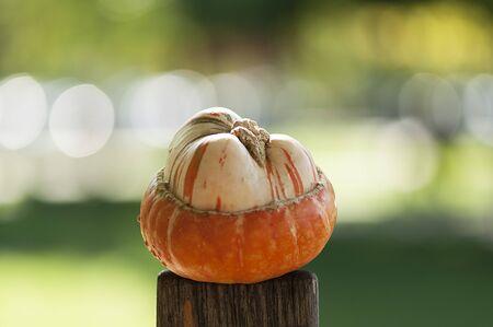 cucurbit: Decorative pumpkin in the sun on a fence Stock Photo