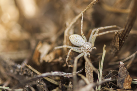 arachnophobia: Small spider hiding in the grass. Camouflaged spider Stock Photo