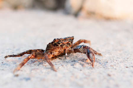 fished: Crab fished out of the sea and sitting on the road