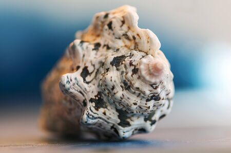 Close-up on a seashell. Shallow depth of field. Stock Photo