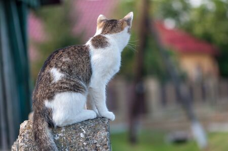 Young cat sitting on the door post. From behind. 版權商用圖片