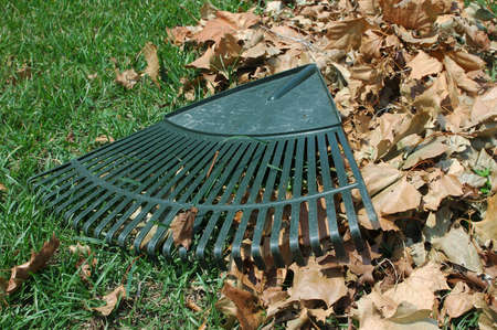 Plastic rake laying on a pile of leaves.