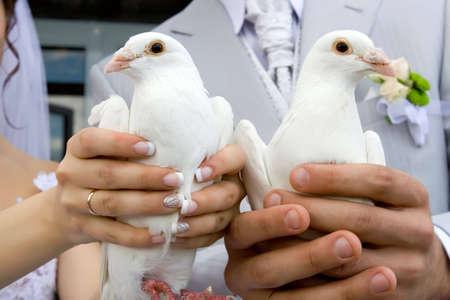 two white wedding doves photo