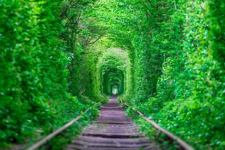 Un ferrocarril en el túnel del bosque primaveral del amor