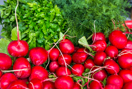 red onions: Spring vegetables - onion, radish, dill, salad