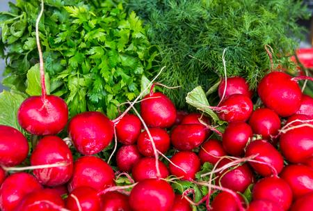 Spring vegetables - onion, radish, dill, salad