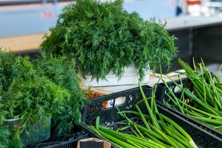 Juicy spring fresh green dill and parsley