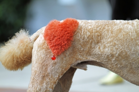 sculpted: Poodle with Red Sculpted Heart on Hip Stock Photo