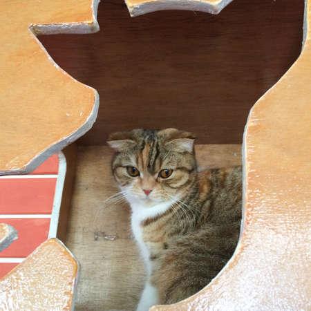 eye: A cat in the box