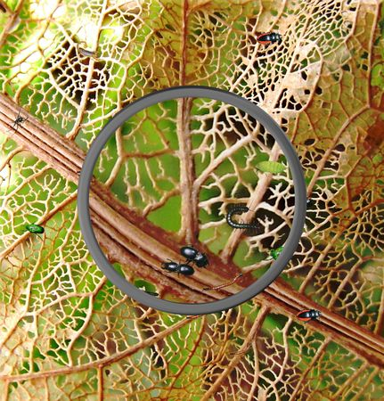 Insects On Leaf Under Magnifying Glass photo