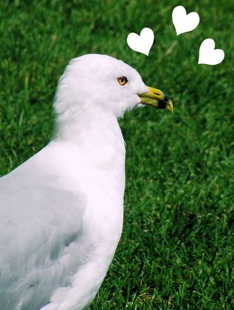 Seagull Longing For ???