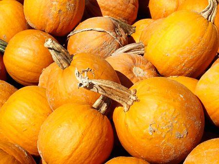 Pumpkins photo
