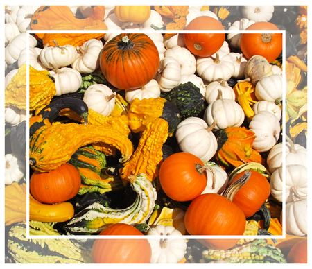 Colourful Pumpkins and Gourds On Display photo