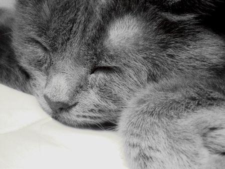 Cat Sleeping Contently Stock Photo - 7992677