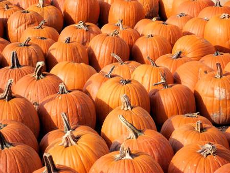 grocer: Field Of Pumpkins
