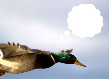 Fast As Lighting Duck with Thought Bubble