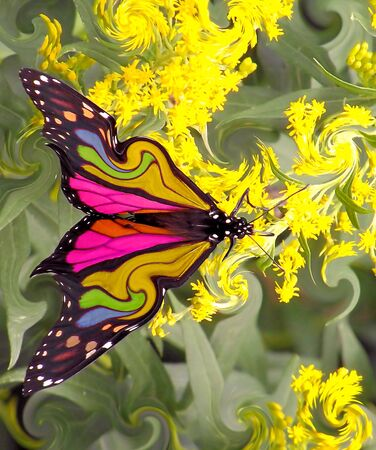 Vlinder met mooie kleuren Stockfoto