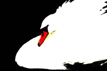 Swan Abstract photo