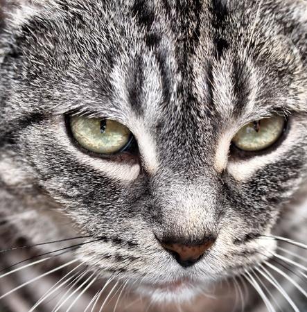 purring: Cat  Stock Photo