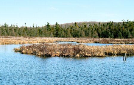 MarshWetlands -  wildlife and bird habitat