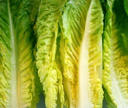 Hojas de lechuga Romaine orgánicos Foto de archivo - 9465643