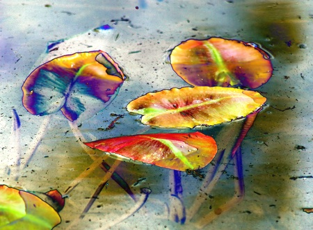 Lily Pad Abstract Stock Photo