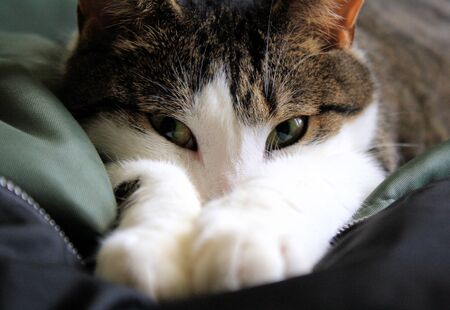 Kitten - cozy and content