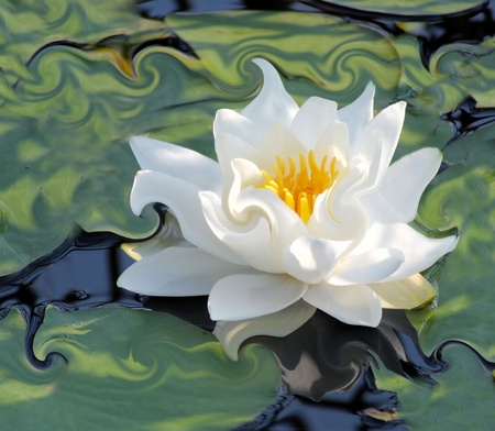 Water Lily  - an abstract