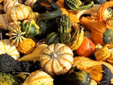 gourds: Gourds Stock Photo