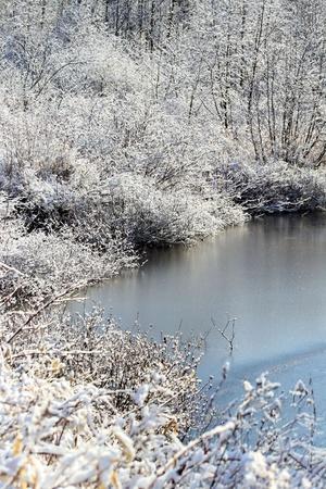 아름다운 겨울 풍경 - 서리 나무에 연못이 약간 냉동 스톡 콘텐츠