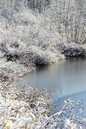 Beautiful Winter Scenery - Frost on trees, pond slightly frozen photo