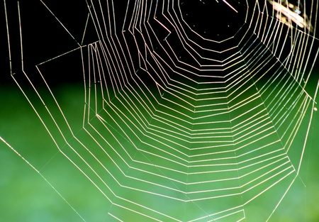 SPIDER WEB - Come into my parlour  said the spider to the fly