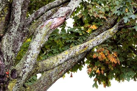 Tree Branches Zdjęcie Seryjne