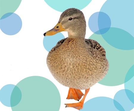 The Little Duck - fun, retro abstract background photo