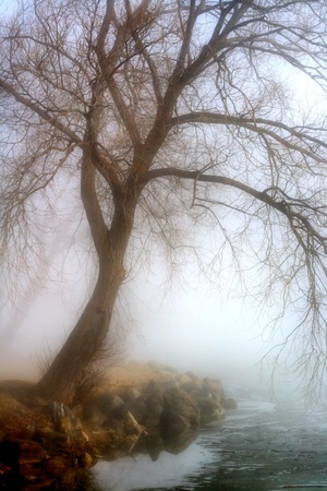 overhanging: Morning Fog At The Lake Stock Photo
