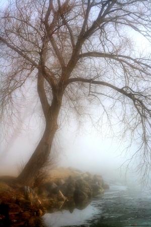 Morning Fog At The Lake 版權商用圖片