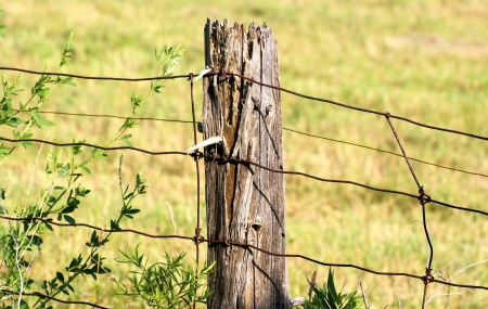 post: Old Wooden Fence Post Stock Photo