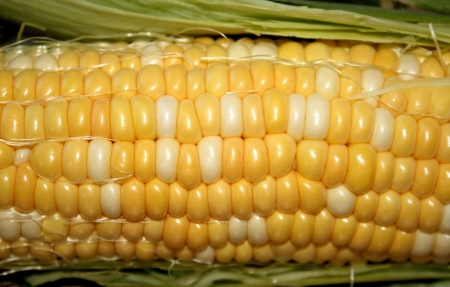 Fresh Sweet Corn photo