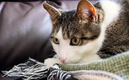 Cat Cozy On Blanket Imagens - 15551332