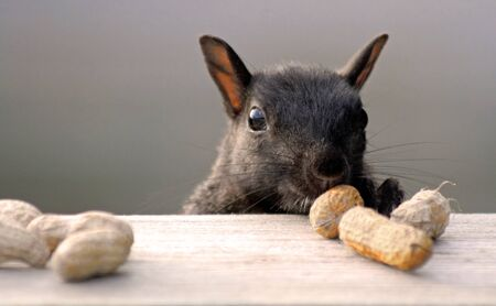 humorous: Squirrel Sneaking Up On Peanuts Stock Photo
