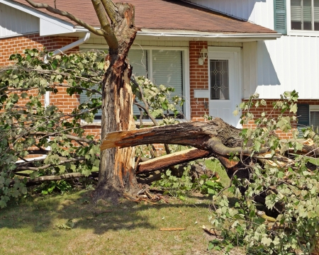 심한 폭풍 후 나무 타락