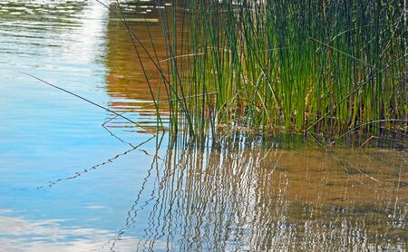 canne: Reeds