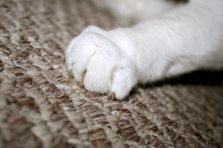 猫の爪がカーペットに掘り 写真素材