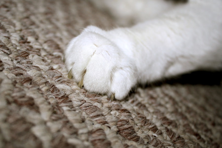 Cat Claw Digging Into Carpet Stock Photo