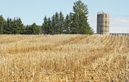 Corn field that has been harvested.  Tall concrete Silo in background photo