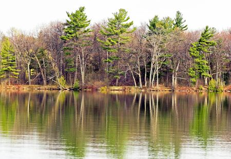 waters: Beautiful tall Evergreen trees reflected in Lake waters in Springtime Stock Photo