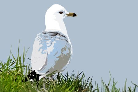 Abstract of a young Seagull standing on grassy shoreline looking out to sea
