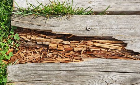 disintegrating: Rotting wood on boardwalk path in need of repair Stock Photo